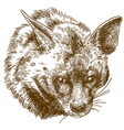 engraving hyena head vector image vector image