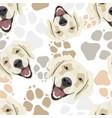 pattern dog paws golden retriever vector image vector image