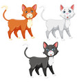 a set of different cat vector image vector image