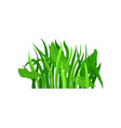 flat icon of fresh grass with leaves wild vector image