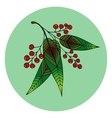 Hand drawn of beautiful rowan berry vector image vector image