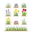 spring wild forest and garden flowers vector image vector image