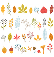 Autumn floral design elements vector image