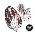 design plantain vector image vector image