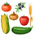 harvest set fruits and vegetables vector image