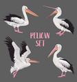 pelican birds set animals in the wild seabirds vector image vector image
