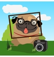 Pug photographer invites you to take photographs vector image