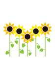 sunflower summer background vector image vector image