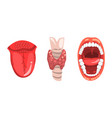 thyroid gland open mouth and tongue human vector image vector image