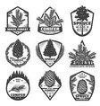 vintage monochrome conifers labels set vector image vector image