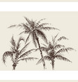 palm trees foliage tree crown drawing vector image