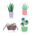 potted plants decoration botanical interior vector image vector image