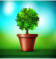 Tree in pot vector image vector image