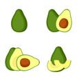 avocado whole fruit slice vector image vector image