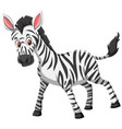 cute zebra white background vector image