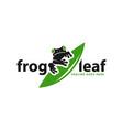 frog animal logo on leaf vector image