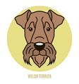 portrait of welsh terrier vector image