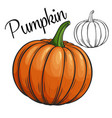 pumpkin drawing icon vector image
