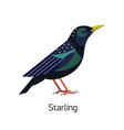 starling isolated on white background small vector image vector image