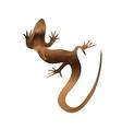 Beautiful sand lizard lizard silhouette vector image