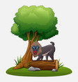 cartoon mandrill baboon under tree vector image