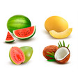 collection of fruit and berries watermelon vector image vector image