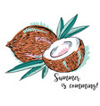 pair of coconuts vector image