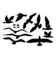 seagull sea gull set vector image