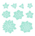 teal succulent plant set on white background vector image vector image