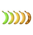 banana fruit ripeness levels from green underripe vector image vector image