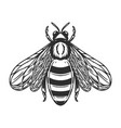 bee in engraving style on white background design vector image vector image
