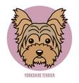 portrait of yorkshire terrier vector image