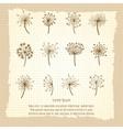 vintage botanical poster with dandelion vector image vector image