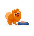 chow chow puppy vector image