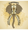 Elephant skull vector image