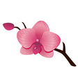 orchid flower vector image vector image