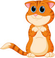 cute kitten standing with big eyes vector image