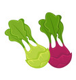 colorful kohlrabi heads with leaves isolated vector image vector image