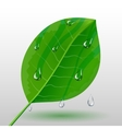 Green leave with water drops vector image vector image