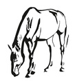 Horse painting vector image