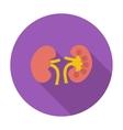 Human Kidney vector image vector image