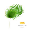 palmetto tropical leaves realistic leafage flora vector image