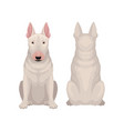 front and back view of sitting bull terrier dog vector image vector image