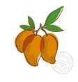 Hand drawn mango fruits