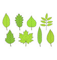 hand drawn set green leaves vector image