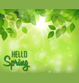hello spring background with fresh green leaves vector image