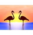 silhouette couple flamingos in the sunset vector image vector image