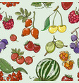 set of different berries pattern vector image vector image