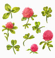 watercolor clover set beautiful spring floral vector image vector image
