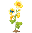 A plant with yellow flowers vector image